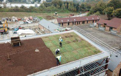 Laying sedum onto soil mix